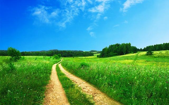 polní cesta